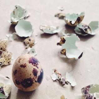 An Egg Dreams II
